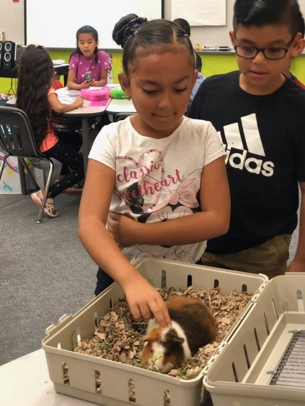 Shelter uses Animals to Teach Kids about Kindness